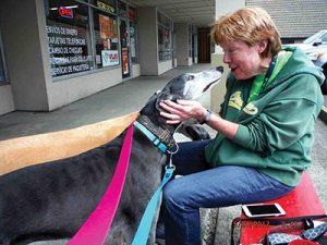"Last month, at the ""Adopt A Greyhound"" event held at U Can Do It Dog Wash & Grooming, Diane Watkins says hello to the greyhound she helped take care of that was adopted by U Can Do It's Dee Dekking at last year's event. Two greyhounds are still looking for a good home. COURTESY SUE WADE"
