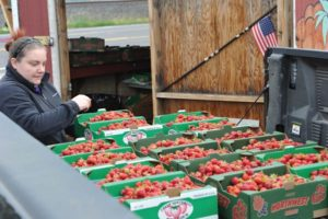 Even though the season is through for the vaunted Hood Strawberry variety, there are still plenty of Albions and Sweet Ann varieties at the two Spada Farms locations: 5905 N.E. 158th Ave. and the stand in the Kmart parking lot, 12336 N.E. Sandy Blvd. Call 503-539-5396 to find out prices and what's in season. STAFF/2018