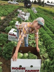 Gabrielle Rossi harvesting romaine lettuce at Rossi Farms with Shaver Elementary School in the background in 2016. COURTESY JOE ROSSI